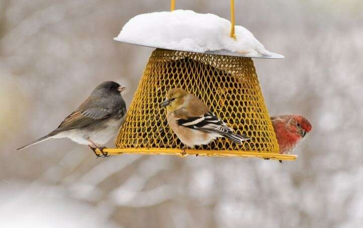 Where to Place Bird Feeders and Bird Houses in Your Garden